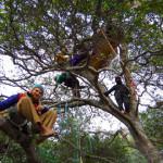 TreeSitters Anniversary